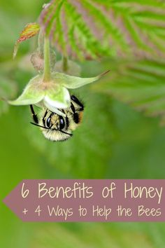 6 Benefits of Honey + 4 Ways to Help the Bees