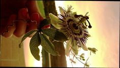 Pasiflora Thing 1, Tattoo, Plants, December, Japanese Tattoos, Flora, Tattoos, A Tattoo, Plant