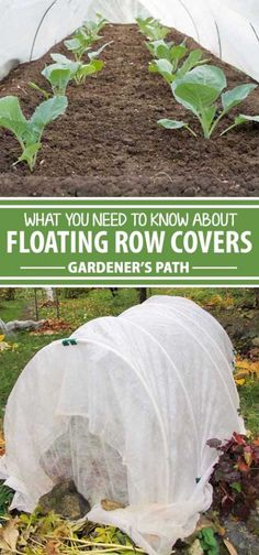 Floating row covers are a must for every gardener. From extending the season to keeping out pests, this multipurpose fabric can transform the way you garden. Keep reading to learn how to use floating row covers to make the most of every season.