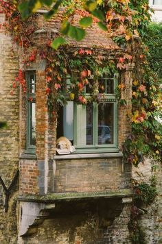 🐕 dogs in windows Future House, My House, Fachada Colonial, Beautiful Homes, Beautiful Places, Wallpaper Wall, Cottage Windows, Window View, Bay Window