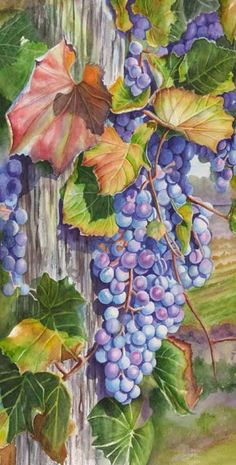 Watercolor painting demonstration of grapes- step 5
