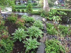 Rain Garden - traditional - landscape - providence - by Groundswell Designs