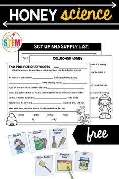 This sweet honey science freebie is the perfect way to teach kids about bees! This activity includes great vocabulary picture cards and interactive sheets perfect for an engaging science unit! #honeyscience #bees #honey Bug Activities, Learning Activities, Picture Cards, First Grade, Teaching Kids, Vocabulary, Honey, The Unit, Student