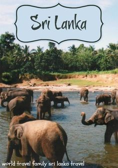Everything you need to know about travel in Sri Lanka.