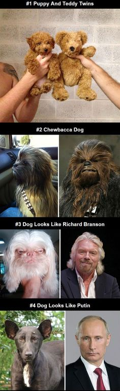 Dogs That Look Like Other Things>> THINGS