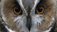 'Terror Owl' Caught In Dutch City After Attacks - Yahoo News UK
