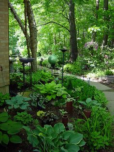 Shade garden - hostas, ferns, begonias