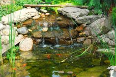 Garden water feature with small trickling stream and natural stone pond with fish.