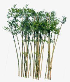 Bamboo, Planta PNG y PSD