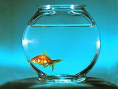 Animalix: Peixes