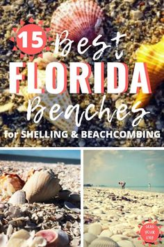 The best beaches for shelling and beachcombing are in Florida. From the Gulf Coast to the East Coast here's a list of 15 best beaches to find a variety of sea shells sea glass and other treasures. Best Beach In Florida, Destin Beach, Florida Vacation, Florida Travel, Florida Beaches, Destin Florida, Beach Vacations, Florida Keys, Palm Coast Florida