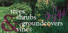 University of Idaho, Landscapes and Gardens website. Link to Trees, shrubs, ground covers and vines.