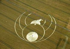Crop circles | Crop Cicles Wiltshire, England. 26th July 2012.