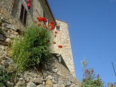 Callas - Dracenie - Var - Provence, via Flickr.