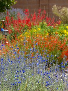 Colorful landscape by Waterwise Landscapes Incorporated in Albuquerque Flowers Perennials, Planting Flowers, Natural Ecosystem, Lawn Sprinklers, Water Wise, Tall Plants, Types Of Plants, Landscaping Tips, Organic Gardening