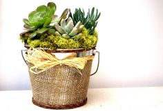 Another World Burlap Succulent Garden by AnotherWorldPlants, $75.00