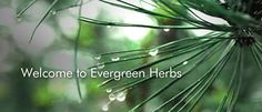 Evergreen Herbs - Chinese Herbs