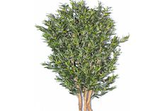 Artificial Uv Olive Tree 5.5ft 2ct for Indoor/outdoor Use. 2yr Manufacturer Warranty Included *** See this great product.