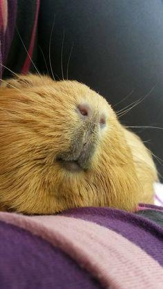 Piggy nose!
