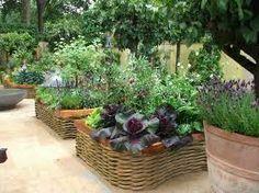 Voor mij een voorbeeld: De eetbare tuin van Bunny Guinness (Chelsea Flower show 2011) - Google Search