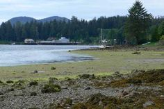 Winter Harbour, Vancouver Island Vancouver Island, Idaho, Canada, Beach, Winter, Outdoor, Winter Time, Outdoors, The Beach