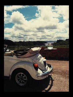VW beetle Vw Beetles, Our Wedding, Bmw, Vehicles, Vw Bugs, Volkswagen Beetles, Vehicle, Bubbles, Tools