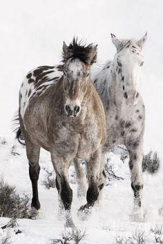Twee in de sneeuw!