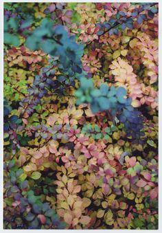 Les Jardins de la Ferme Bleue...♔..