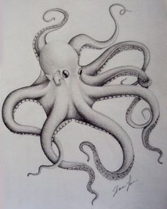 Just playing around to see if i could draw a convincing Octopus. Octopus Sketch, Octopus Drawing, Octopus Tattoo Design, Octopus Tattoos, Octopus Artwork, Octopus Anatomy, Animal Drawings, Cool Drawings, Baby Octopus