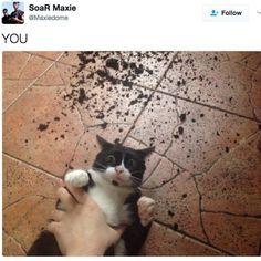 32 Katzen, die sich komplett selbst übertroffen haben