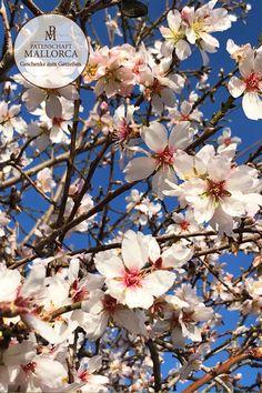 Die 44 Besten Bilder Von Olivenbaum Olivo Jardines Und Provenza