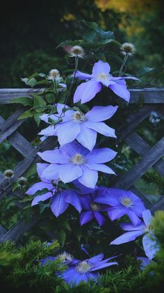 Blue Clematis (will survive through the winter; paired well with Vining Roses; fast grower)