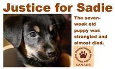 Petition · JUSTICE FOR SADIE, 7-week old puppy who was strangled and nearly died · Change.org