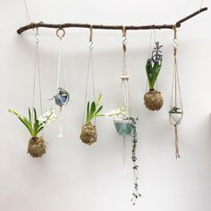 """5,855 Likes, 79 Comments - @etsy on Instagram: """"Quite the unique way to showcase your plant collection. Ceramic hanging planters from @EtsyUK…"""""""
