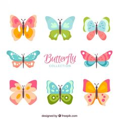 Colors kinds of butterflies Free Vector