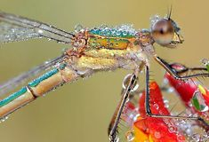 Remarkable insect photography by Martin Amm - Lost At E Minor: For creative people
