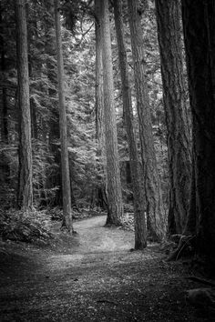 Black and white photograph of trees lining a path through the forest