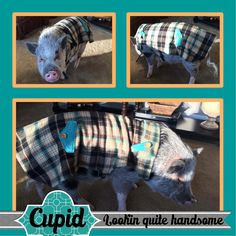 https://www.facebook.com/LaChulaFashions/ custom flannel lined with fleece coat for Cupid