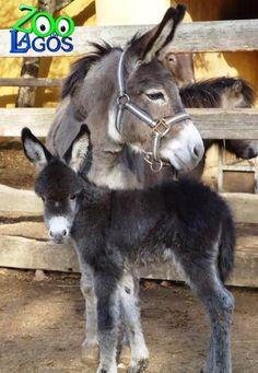 """Rita"", the donkey in Zoo Lagos/Portugal"