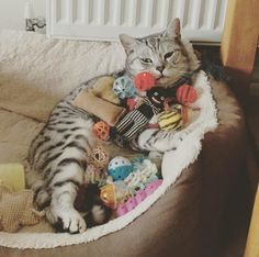 All these toys are belong to me #Cute