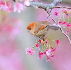 How pretty is this bird? Quite cute and in such as perfect setting.