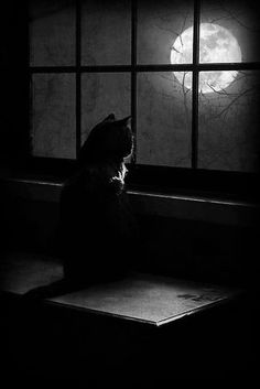 Cat looking out at the moon.