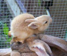 15 conejitos pequeñitos que son irresistiblemente adorables.