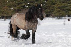 mulassier horse | projet_eco_p4.jpg