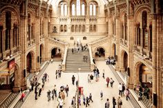 National History Museum in London / photo by Roman Peregontsev