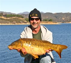 A rare Linear Mirror Carp from a Southern Californian Lake just North of LA, Feb' 2012.  A Linear Mirror Carp is easily identified by a single row of scales following the fish's lateral line. She weighed in at 18 pounds.  #CyprinusCarpio #MirrorCarp #BigCarp #CarpFishingInAmerica #HowToCatchCarp #AmericanCarpSociety #WayneBoon
