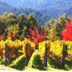 fall weekend trip to Napa Valley, stunning vineyard in Calistoga