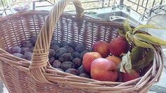 Plum, Apple, Fruit, Diy, Apple Fruit, Bricolage, Do It Yourself, Homemade, Apples