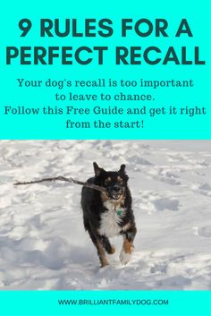 Get your free download and get a fast and instant recall from your dog! Read the post ...