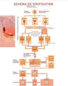 Vins rouges de Provence - Schéma de vinification